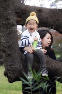 木の上に乗れた!の写真・画像素材[1591482]