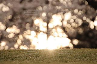 夕日と桜の写真・画像素材[1883193]