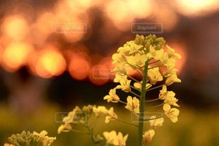 春の夕暮れの写真・画像素材[2033133]