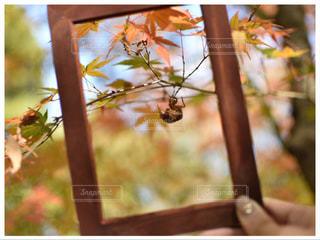 枝の上に座って鳥の写真・画像素材[870082]