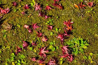 近くの花のアップの写真・画像素材[894373]
