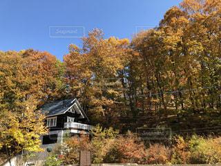 家の前に木の写真・画像素材[856329]