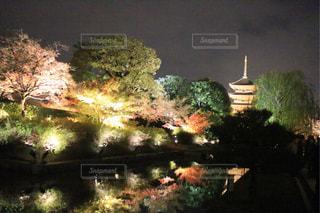 夜,紅葉,京都,ライトアップ,旅行,東寺,寺