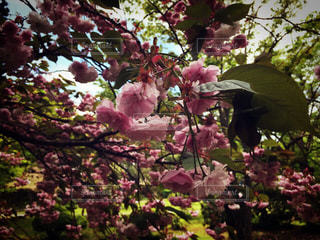 近くのフラワー ガーデンの写真・画像素材[858118]
