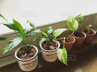 鍋に緑の植物の写真・画像素材[965915]