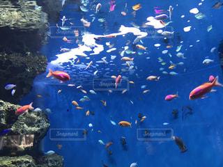 カラフルな魚達の写真・画像素材[992909]