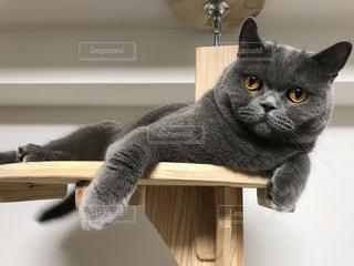 猫の写真・画像素材[1257946]