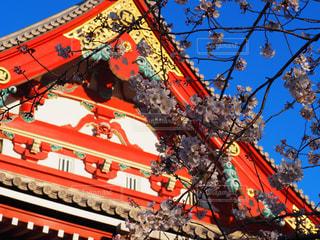 空,花,春,桜,屋外,神社,赤,さくら