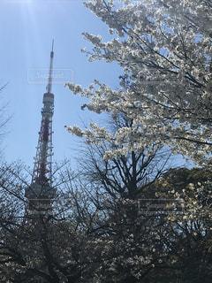 空,花,春,桜,東京タワー,東京,太陽,タワー,陽射し,さくら