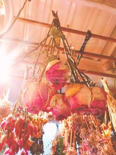 可愛いピンクローズのドライフラワーの写真・画像素材[886465]