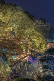 森を流れる川の写真・画像素材[1680074]