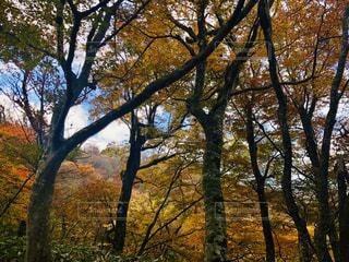 自然,紅葉,光,樹木