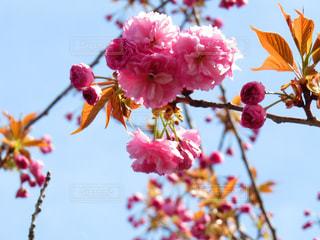 近くの木からぶら下がっている花のアップの写真・画像素材[861713]