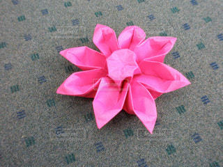 ピンクの花のグループの写真・画像素材[865897]