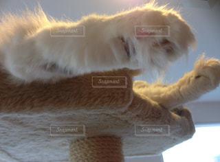 猫のぬいぐるみの前に座っての写真・画像素材[875653]