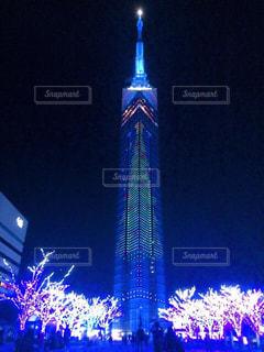 福岡タワー、クリスマスの桜 - No.863273