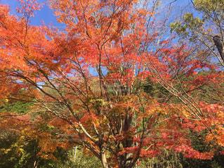 阿蘇の紅葉 - No.870010