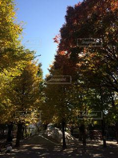 道の真ん中にツリーの写真・画像素材[885690]