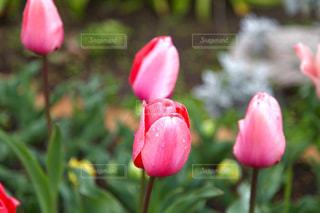 近くの花のアップの写真・画像素材[868046]