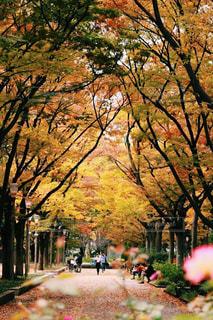 秋色に染まった公園で散歩する家族、友達。の写真・画像素材[869262]