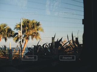夕焼け,車,ヤシの木,休日,ドライブ,おでかけ,お出かけ