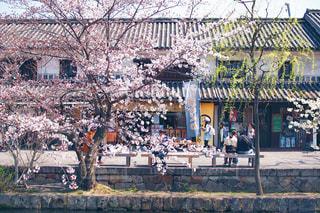 自然,花,カメラ,桜,レトロ,旅行,旅,休日,岡山,一眼レフ,お出かけ