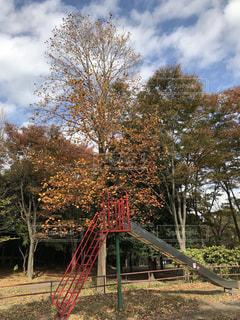 秋の公園の写真・画像素材[865305]