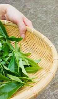 緑,葉,茶摘み,静岡,緑茶,煎茶,茶摘み体験