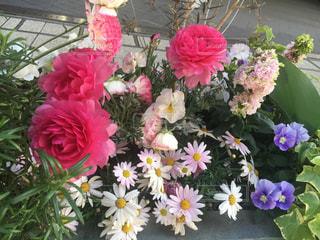 花の写真・画像素材[2048922]
