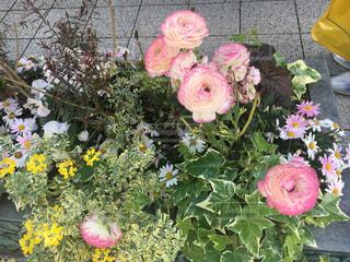 花の写真・画像素材[2049048]