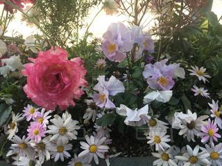 花の写真・画像素材[2049052]