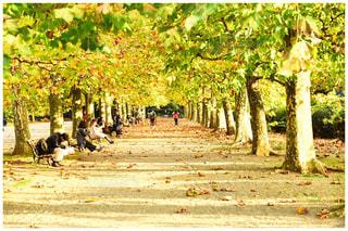 ツリー横の通りを歩く人々 のグループの写真・画像素材[861509]