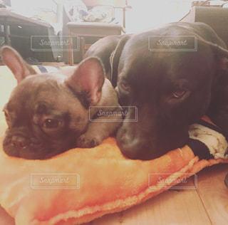 ベッドの上に横たわる犬の写真・画像素材[995561]