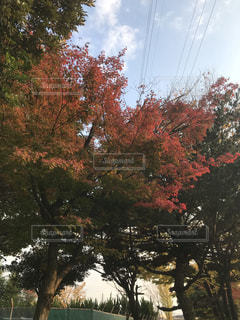 フォレスト内のツリーの写真・画像素材[869432]