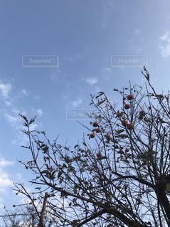 暮れゆく秋の写真・画像素材[869433]