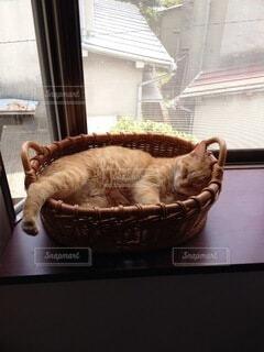猫,動物,屋内,かわいい,窓,子猫,オシャレ,可愛い,お洒落,おしゃれ
