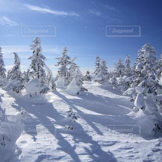 青空と樹氷の写真・画像素材[1131645]