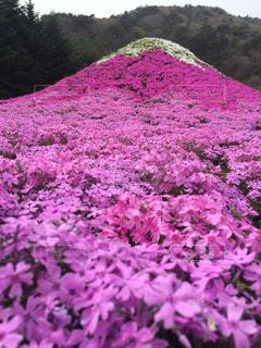 緑の葉とピンクの花の写真・画像素材[1134329]