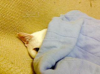 猫,冬,ペット,布団,寒い,目,半分