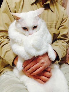 猫,白,かわいい,毛,寒がり,寒さ対策,毛むくじゃら
