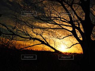 自然,風景,空,屋外,太陽,夕焼け,夕暮れ,シルエット,光,樹木,草木