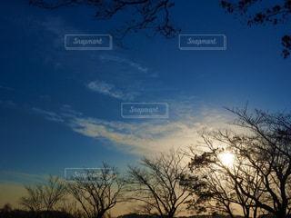 自然,空,太陽,光,樹木