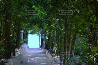 沖縄のフクギの並木道から望む青い海の写真・画像素材[948681]