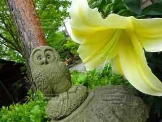 庭の植物の写真・画像素材[984949]