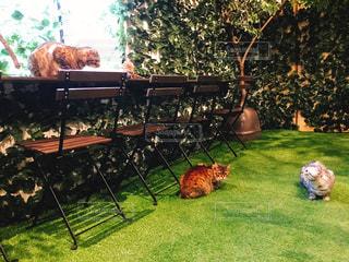 カフェ,休日,猫カフェ,お出かけ,癒しの空間,猫だらけ
