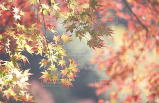 近くの木のアップの写真・画像素材[1622038]