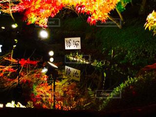 紅葉ライトアップの写真・画像素材[862446]