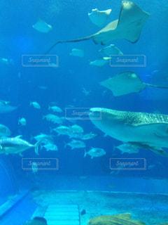 魚,水族館,沖縄,旅行,サメ,水槽,エイ,美ら海