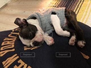 地面に横たわっている黒犬の写真・画像素材[977364]