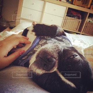犬のベッドに横になっている猫 - No.977372